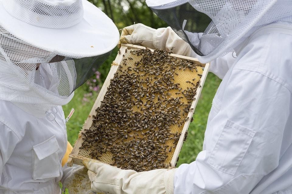 Mannavita gyümölcslevek, kolloidok és méhészeti termékek